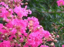実家の庭に咲いた花