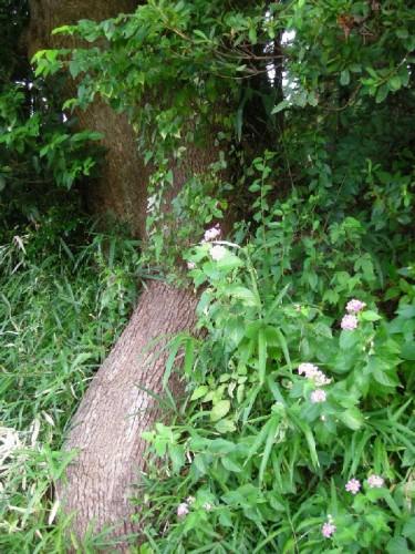 公園手前の木の根っこ