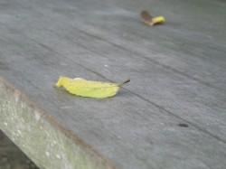 ベンチの落ち葉