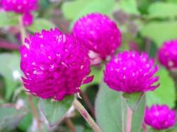 何の花?濃いピンクが滲んじゃう!