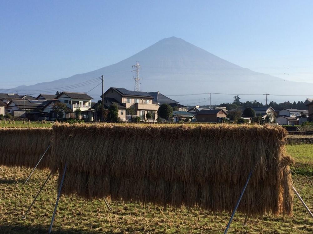 稲穂と富士山2016-1019