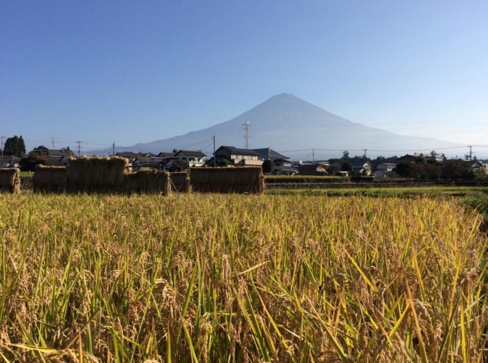 田園と富士山2016.1019