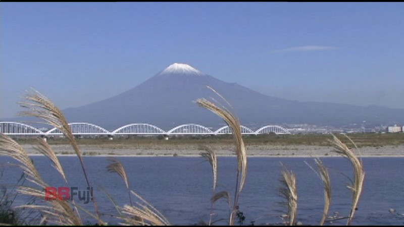 A Japanese pampas grass and the mt.Fuji of fuji-river